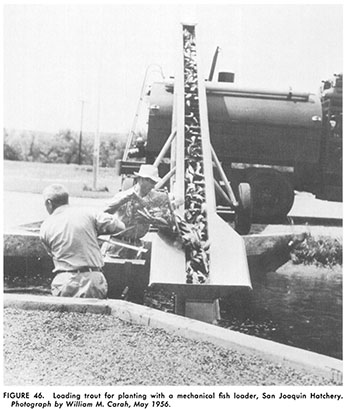 1956 photo of mechanical fish loader