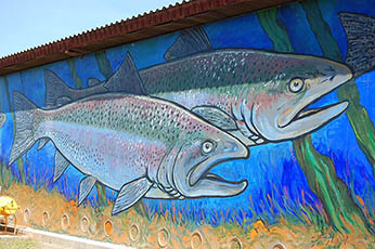mural of steelhead