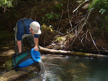 Staff Releasing Juvenile coho to a Russian River Tributary