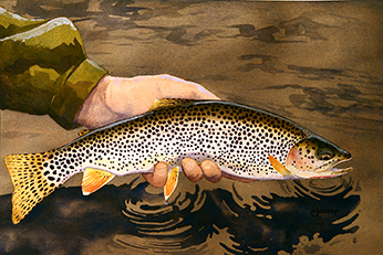 Coastal cutthroat trout watercolor by Mark Jessop of Troutfin Studio