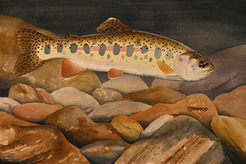 Goose Lake redband trout watercolor by Mark Jessop of Troutfin Studio