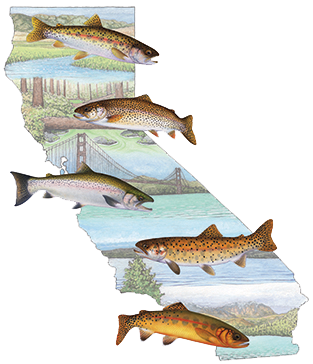 illustrations of trout and California scenery by Tim Gunther