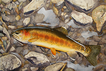Little Kern golden trout watercolor by Mark Jessop of Troutfin Studio