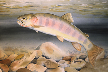 Paiute cutthroat trout watercolor by Mark Jessop of Troutfin Studio