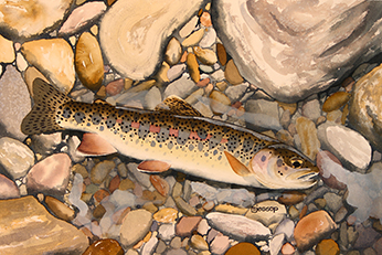 Warner Lakes redband trout watercolor by Mark Jessop of Troutfin Studio