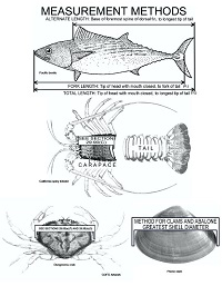 thumbnail sized photo of the officially recognized measurement methods for finfish and shellfish