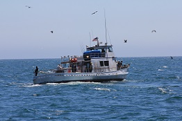 a commercial passenger fishing vessel cruising on open ocean surrounded by seagulls