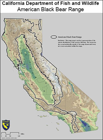 Black bear range in California