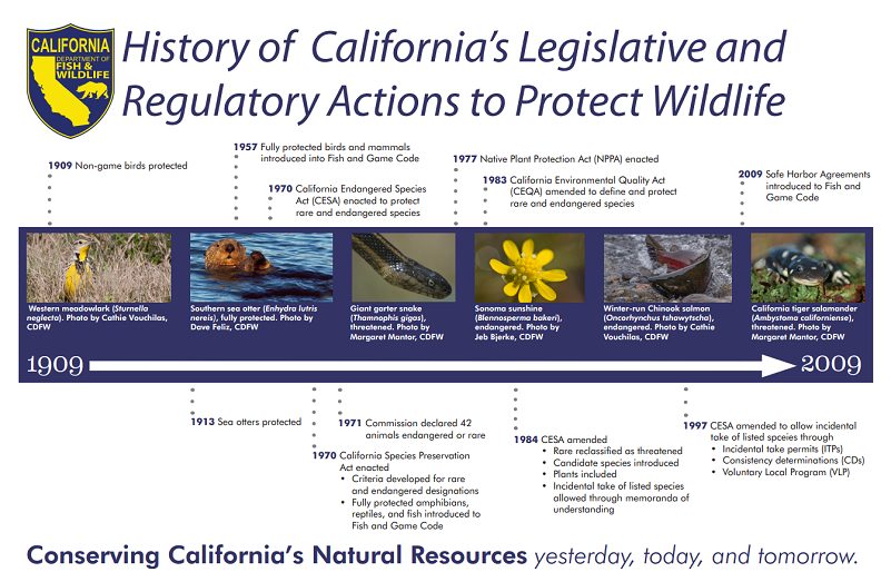 Timeline of California's Regulatory and Legislative Actions to Protect Wildlife - click to enlarge in new window