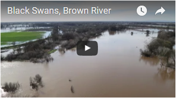 aerial view of broad muddy river - link opens video in new window