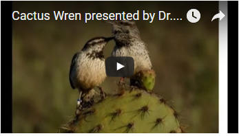 two birds atop a cactus - link opens video in new window