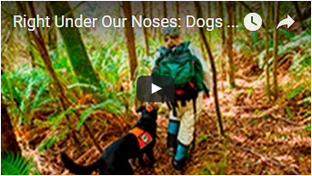 scientist and black dog in forest - link opens video in new window