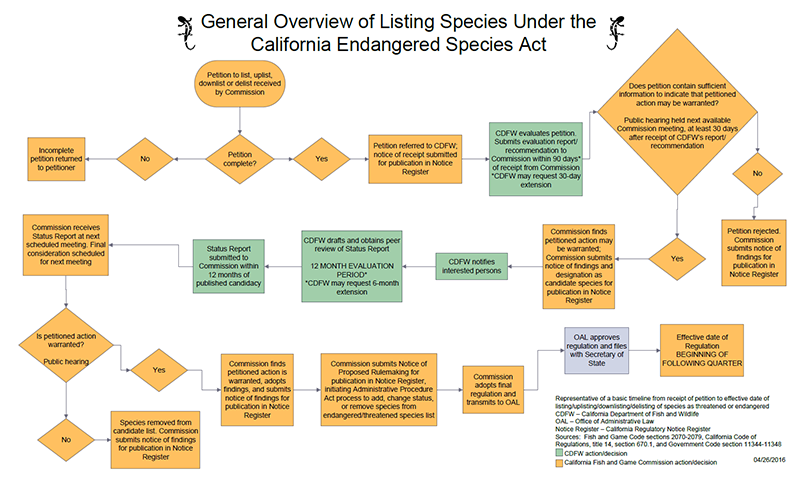 CESA species listing overview flowchart - click to enlarge in new window