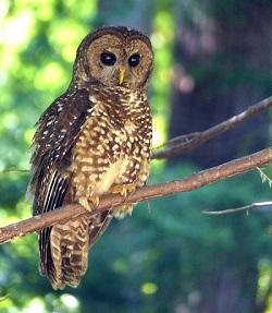 www owl forum
