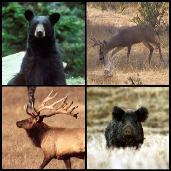 wild game (bear, deer, elk, wild pig)