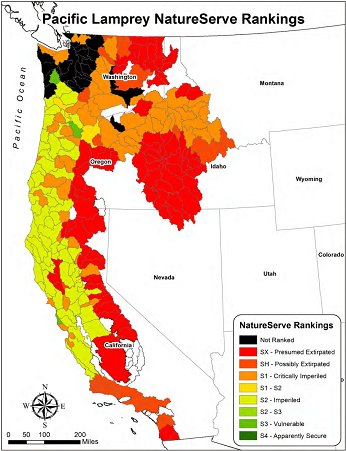 map showing Pacific Lamprey NatureServe rankings - click to enlarge in new window