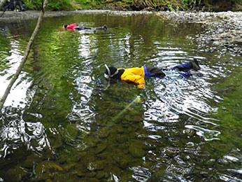 Figure 4. California Department of Fish and Wildlife divers detecting and counting coho salmon and steelhead trout. Photographer: Seth Ricker, CDFW, June 15, 2015, Freshwater Creek, Humboldt County