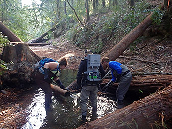 Figure 5.  CDFW staff rescuing juvenile salmon from isolated and drying habitats.  Photographer: Tyler Brown, CDFW, October 8, 2015, Olds Creek, tributary to the Noyo River, Mendocino County.