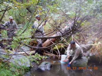 CDFW biologist release McCloud Redband Trout to native trout streams