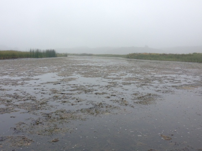 Figure 6.  Algae bloom in Pescadero Creek lagoon in the summer of 2014.  (Photo: CDFW)