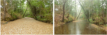 Mill Creek, Sonoma County September 30 (left) and December 3, 2015 (right)