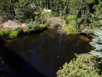 Photo: Black water pool in Devils Hole lake outle