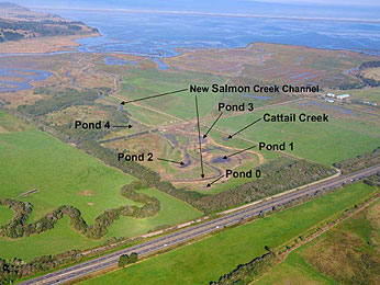 Fish and water quality sampling locations in the newly constructed off channel ponds, new Salmon Creek channel, old Salmon Creek channel, and Cattail Creek