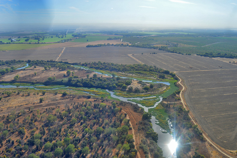 Aerial photo of large amounts of water hyacinth growing on the San Joaquin River at the confluence of the Tuolumne