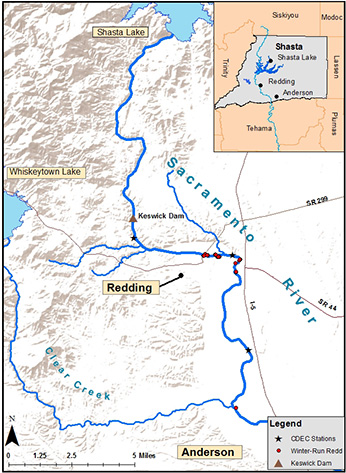 map of the locations of monitored winter-run Chinook Salmon redds and monitoring stations on the Upper Sacramento River; all redds were located downstream of the Keswick Dam - click to enlarge in new window
