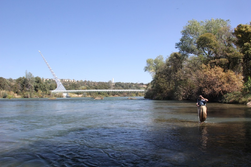 biologist from the Pacific State Marine Fisheries Commission measuring the water flow at the site of a winter-run redd towards the center of the Upper Sacramento River