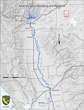 Adult Sturgeon Monitoring and Research Map