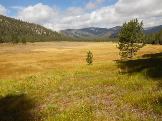 Photo of Volcano Meadow, the terrestrial habitat surrounding Volcanic Creek.