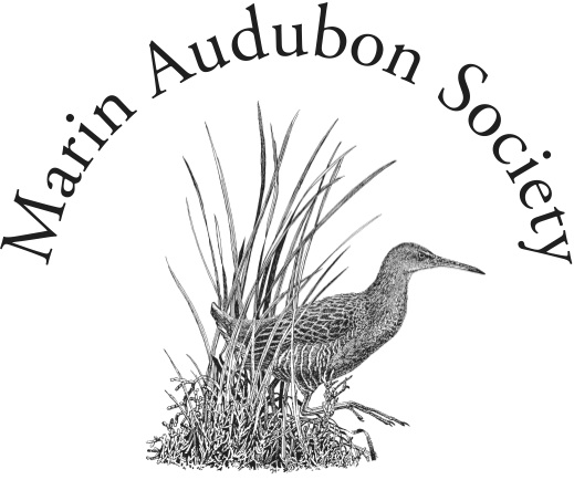 Marin Audubon Society logo - website opens in new window