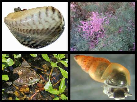 collage of various invasive species