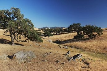 View of rolling hills with oak trees and large boulders