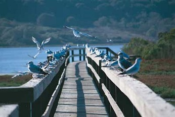 Image of Elkhorn Slough bird sitting on on the wooden railing