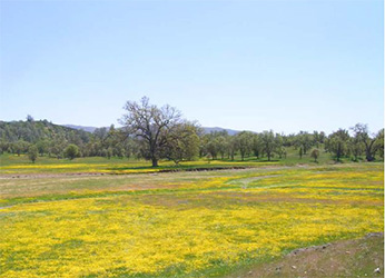 meadow at San Antonio Valley ER