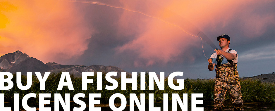sport fishing licenses and report cards