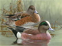 Duck Stamp - 2013