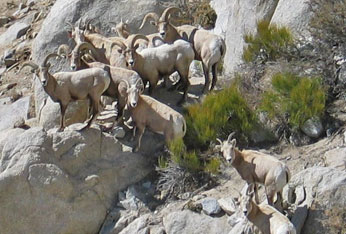 Bighorn Group Sand Mountain (2008)
