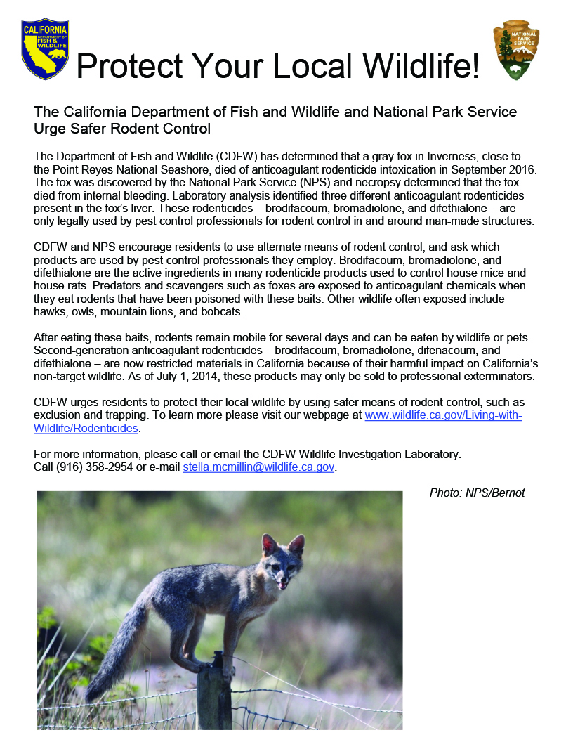 flier asks people to use safer rodent controls; includes photo of a gray fox standing atop a fence post - click to enlarge in new window