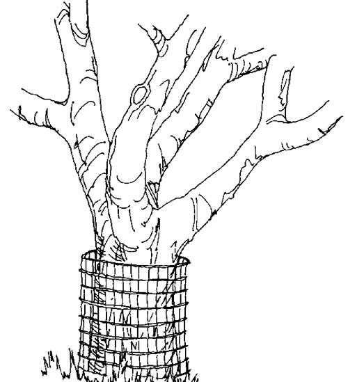illustration of tree with wire fencing around base of trunk