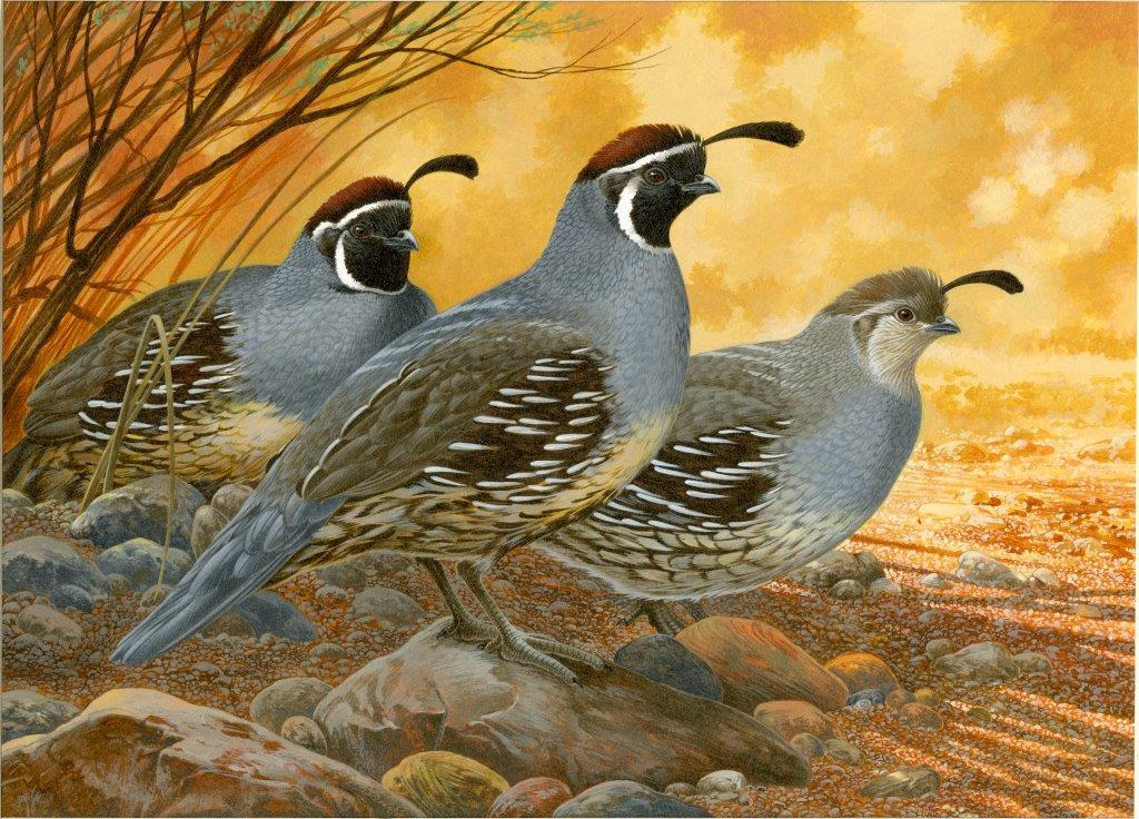 2014 upland game bird stamp art