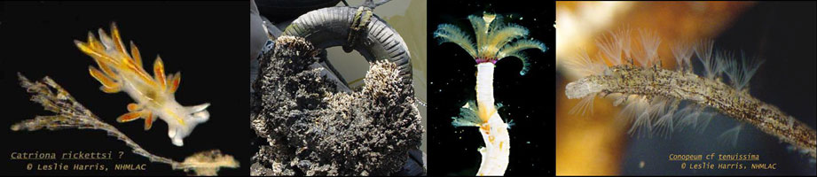 Collage of underwater specimens