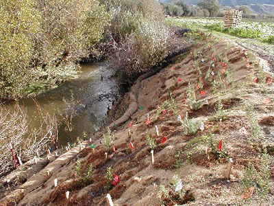 A creek with new plantings.