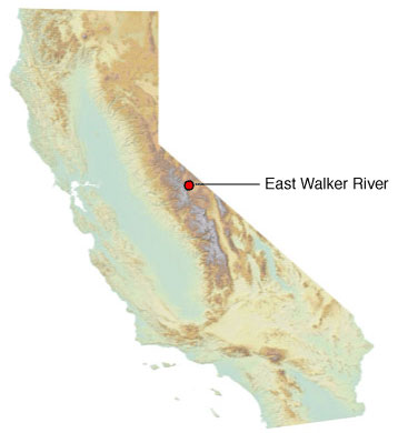 Graphic California map showing the locations of East Walker River spill