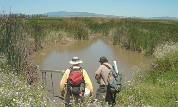 Scientists with back packs wading into the marsh