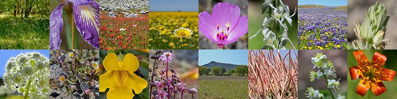 A grid of 16 square images showing native California plants and habitats, including a green woodland with a rare grass, a close-up of an iris flower with dew, a subalpine meadow with paintbrush flowers, a field of tidy tip flowers, a close-up of a pink Clarkia flower, a white orchid, a field of purple lupine, a close-up of a rare birds-beak plant, an umbel of flowers with sun shining through them, a rare beach Layia plant, a close-up of a seepspring monkeyflower, a pink hemiparisitic plant, a grassland near an oak woodland, cactus spines, a close-up of meadow rue flowers, and a close-up of a leopard lily flower