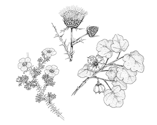 Line Drawings by Mary Ann Showers