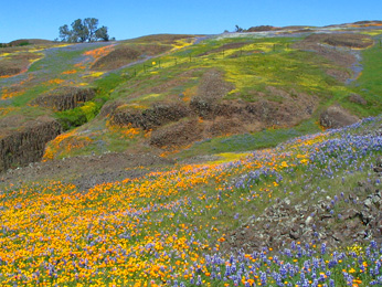 hills with wildflowers